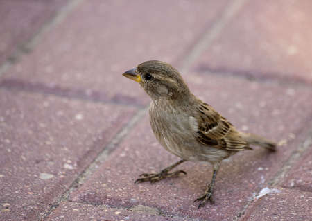 intriguing: A small brown and white sparrow on the ground