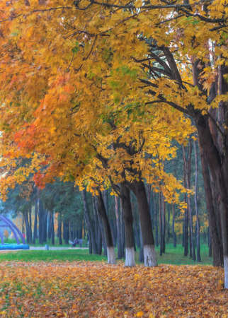 oil park: oil painting on canvas of autumn park with yellow trees and path