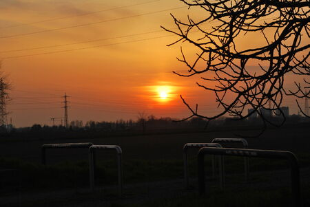 albero: Tramonto Chiaravalle Stock Photo