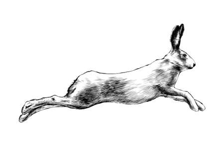 Vector engraved style illustration for posters, decoration and print. Hand drawn sketch of wild hare in black isolated on white background. Detailed vintage etching style drawing. Stock Vector - 114464979