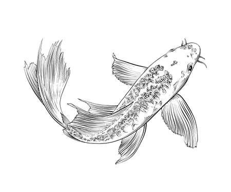 Ilustración de estilo grabado vectorial para carteles, decoración e impresión. Boceto dibujado a mano de pez carpa japonesa aislado sobre fondo blanco. Dibujo grabado vintage detallado.