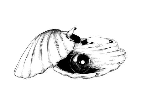 Vector engraved style illustration for posters, decoration and print. Hand drawn sketch of shell with pearl in black isolated on white background. Detailed vintage etching style drawing