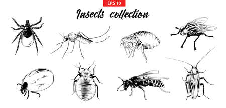 Vector engraved style illustrations for posters, logo, emblem and badge. Hand drawn sketch set of insects, fly, sucker, mosquito, bug, wasp, mite, cockroach. Detailed vintage etching drawing. Illustration