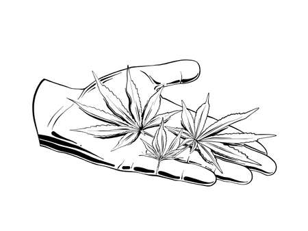 Vector engraved style illustration for posters, logo, emblem, decoration and print. Hand drawn sketch of marijuana leaves on the hand, on white background. Detailed vintage etching style drawing.