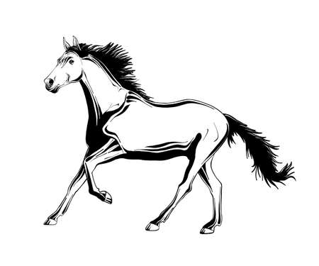 Vector engraved style illustration for posters, decoration and print. Hand drawn sketch of running horse in black isolated on white background. Detailed vintage etching style drawing. Illustration