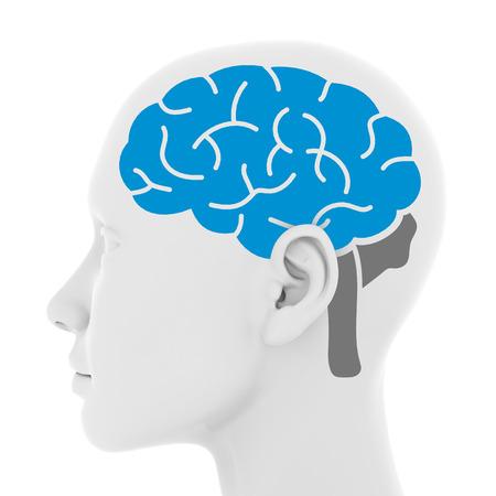 impulses: The brain