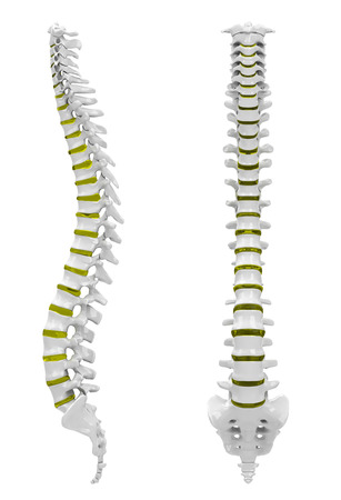 The backbone Stock Photo