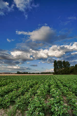 Landscape planting potatoes in Valladolid, Spain Stock Photo