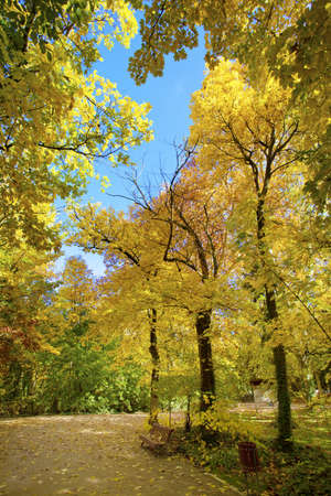 Autumn in the park. Campo Grande public garden, Valladolid. Spain. Stock Photo