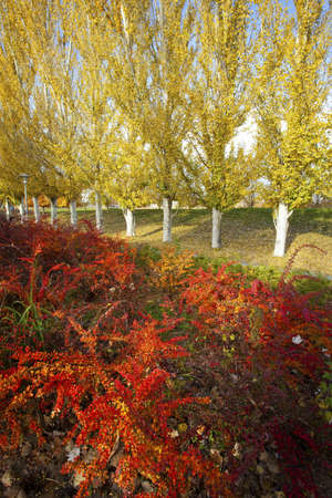 Vibrant Colors of Autumn. Valladolid Park, Spain Stock Photo - 16755778