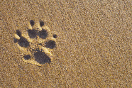 Dogs single paw print on the sand. Nature Backgrounds. photo