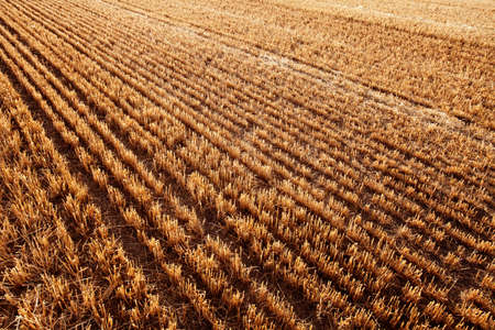 diminishing perspective: Newly harvested cereal field.  Diminishing Perspective for Backgrounds or Texture. Valladolid, Castilla y Leon, Spain
