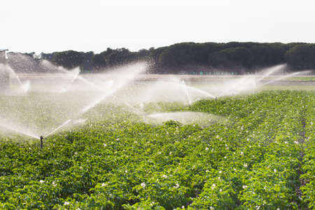 crop sprayer: Irrigation in Field of growing potatoes. Valladolid Spain. Stock Photo