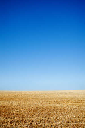 Clean blue sky over cereal field photo