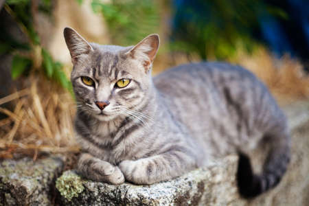 Pretty tabby cat with selective focus. No studio shot. Stock Photo