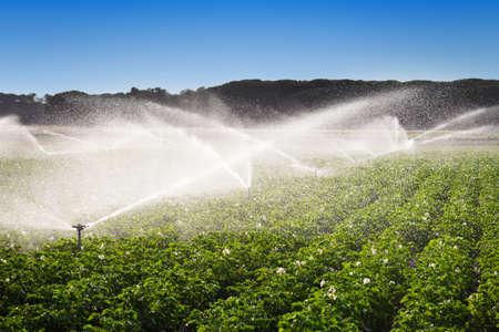 Irrigation in Field of growing potatoes  Valladolid, Spain
