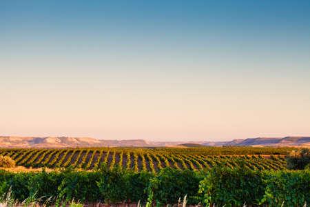spain: Spanish vineyard landscape. Ribera del Duero, Europe, Spain. Valladolid, Castilla y Leon.