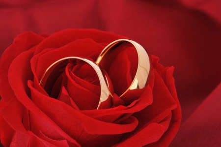 cordiality: Two golden rings in red rose on red satin background