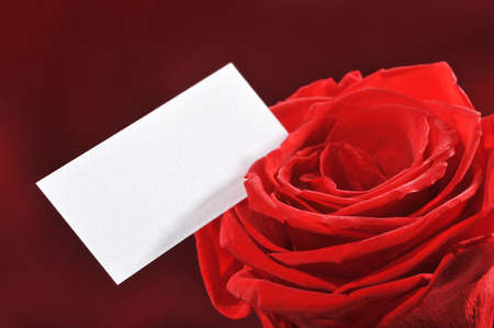 Red rose with white greeting card on red satin background Banco de Imagens