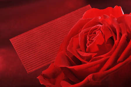 Red rose with red greeting card on red satin background