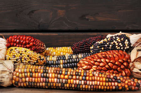mealie: potpourri of maize-cobs for thanksgiving in front of old weathered wooden boards Stock Photo