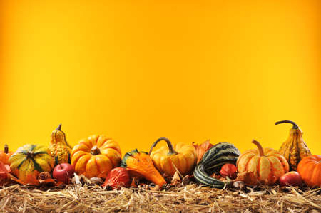 Thanksgiving ? many different pumpkins on straw in front of orange background with copyspace Stock Photo