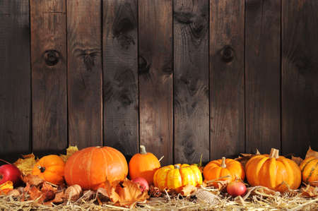 national border: Thanksgiving - many different pumpkins on straw in front of old weathered wooden boards with copyspace