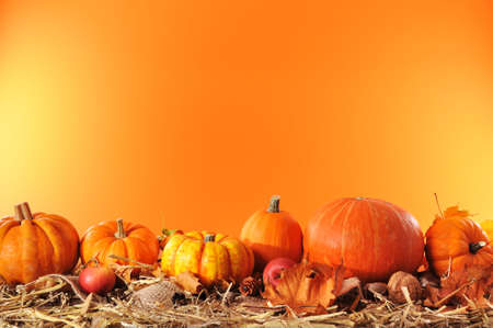 Halloween - many different pumpkins on straw in front of orange background with copyspace