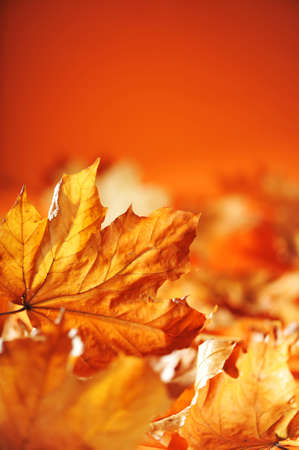 macro detail of anhydrous autumn foliage in different shades of brown and orange
