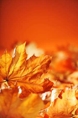 weather beaten: macro dettaglio di anidra fogliame autunnale in diverse tonalit� di marrone e arancione Archivio Fotografico
