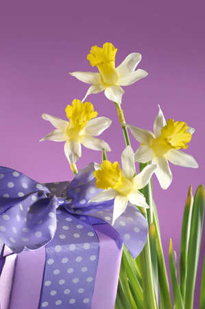 violet aanwezig met lus en vier narcissen