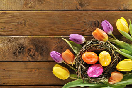 hen's: Easter nest with colored hen? S eggs and tulips on old wooden board