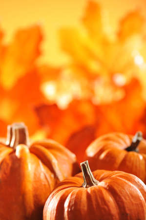 pumpkins in front of highlighted orange oak leaves