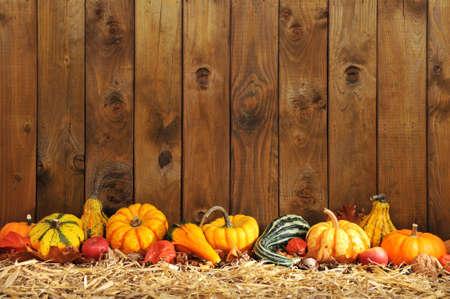 感恩節 - 在秸杆的許多不同的南瓜在與copyspace的老被風化的木板前面 版權商用圖片