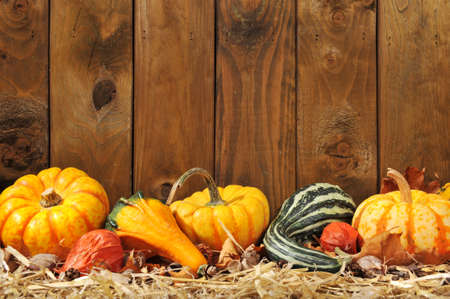 cucurbit: Thanksgiving Many different pumpkins on straw in front of old weathered wooden boards with copyspace