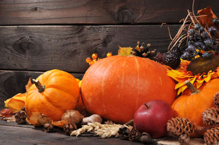 conker: Thanksgiving different pumpkins with nuts berries and grain in front of wooden board