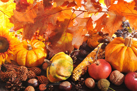 corn flower: Thanksgiving different pumpkins with nuts and grain maize berries in front of highlighted oak foliage