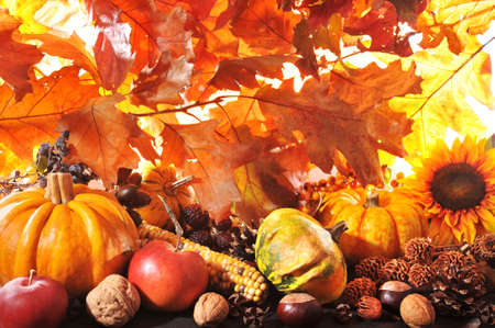 tree nuts: Thanksgiving different pumpkins with nuts and grain maize berries in front of highlighted oak foliage