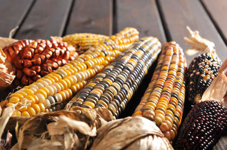 mealie: potpourri of maizecobs for thanksgiving on old weathered wooden boards