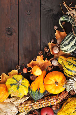 ash gourd: Thanksgiving different pumpkins with nuts berries maizecob and grain on wooden floor with copy space