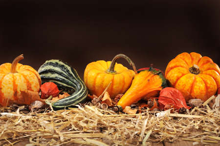 Thanksgiving Many different pumpkins on straw in front of a dark background with copy space Banco de Imagens