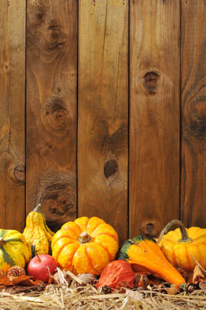 Danksagung - Viele verschiedene Kürbisse auf Stroh vor der alten verwitterten Holzbrettern mit Exemplar