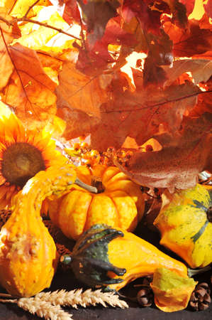 corn flower: Thanksgiving - different pumpkins with nuts, maize, berries and grain in front of highlighted oak foliage