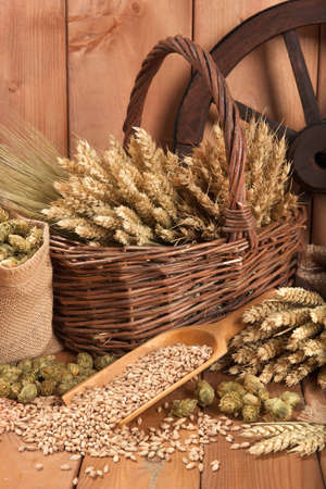barley malt: beer ingredients with hops, wheat, grain, barley, malt and cartwheel Stock Photo