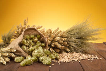 cebada: Ingredientes cerveza lúpulo, trigo, grano, cebada y malta Foto de archivo