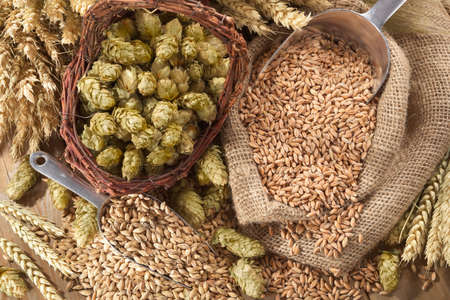 beer ingredients hops, wheat, grain, barley and malt