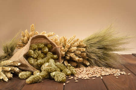 Ingrédients de la bière houblon, blé, grain, orge et malt Banque d'images - 51980165