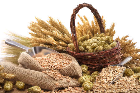 beer ingredients hops, wheat, grain, barley and malt isolated on white