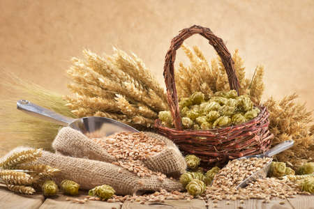 weather beaten: beer ingredients hops, wheat, grain, barley and malt