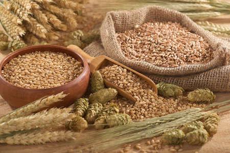 wheat grain: beer ingredients   hops, wheat, grain, barley and malt